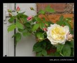 Croft Castle Walled Gardens #05