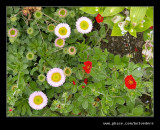 Croft Castle Walled Gardens #12