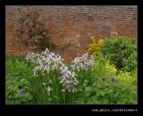 Croft Castle Walled Gardens #14