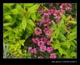 Croft Castle Walled Gardens #15