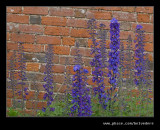 Croft Castle Walled Gardens #19