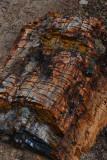 Like Trees?  Like Rocks?  Escalante PETRIFIED FOREST State Park