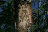 My Totem