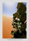 Mauritania 46