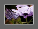 Floral 47