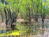 Spring Swamp DSCF01860