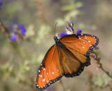 Butterfly 46544