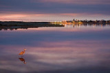 Goose Island Twilight 49987