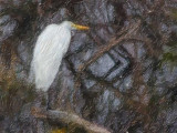 Egret In A Swamp 51194 Art