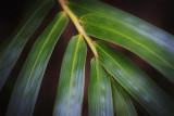 Bamboo 52174