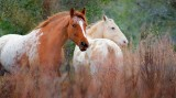 Two Horses 53323