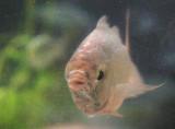 Fish 54457