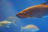 Fish 54490