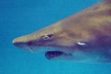 Shark 54505