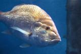 Fish 54520