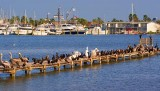 Pier of Birds 55330
