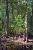 Swamp Scene 56967