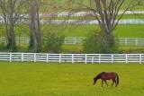 Kentucky Horse Farm 20070410