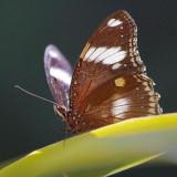 Butterfly 60001