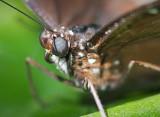 Butterfly 59909