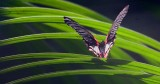 Butterfly 59848