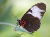 Butterfly 59772