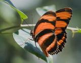 Butterfly 59781