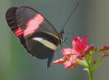 Butterfly 59787