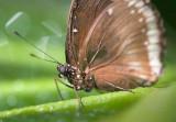 Butterfly 59900