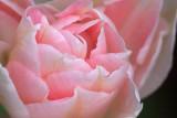 Pink Flower 60178