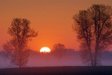 Trees In Sunrise 20070521