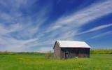 Barn In A Field 20070522