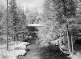Paul's Creek 9222BW