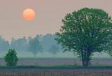 Hazy Sunrise 60356