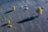 Volcanic Trees 29931