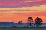 Two Trees Under Sunrise Clouds 60781