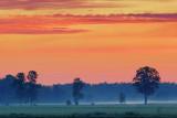 Misty Field At Sunrise 60785