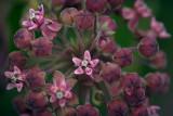 Wildflower 62024
