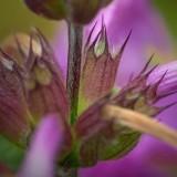 Weird Flower 62334