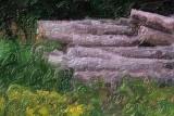 Log Pile 63046 Art