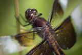 Dragonfly 63279
