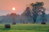 Bales & Tree At Sunrise 63859