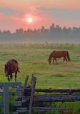 Two Horses At Sunrise 63834