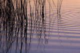 Ripples & River Grass 20070817