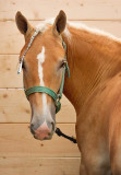 Horse In Stall 67215