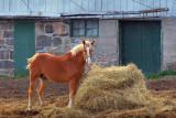 Horse & Hay 67944