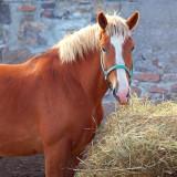My Hay... 67949