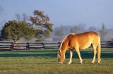 Grazing Horse 68186