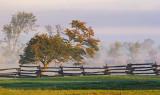 Trees, Fence & Fog 20071005