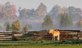 Lone Horse 68215